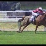 Offre amz: Brosse  red dead redemption cheval | Avis des forums