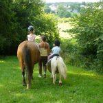 Code promo: Cadeau original femme chevaux | Avis des experts