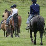 Derniers modèles: Carrousel  reprise poney | Avis & prix