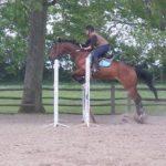 Coupon amz: Baume d'entretien chevaux | Test complet