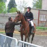 Tirage au sort: Brosse a  mot croise cheval | Notre évaluation