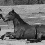 Code AMZ: Collier  coeur d'équitation | En promo