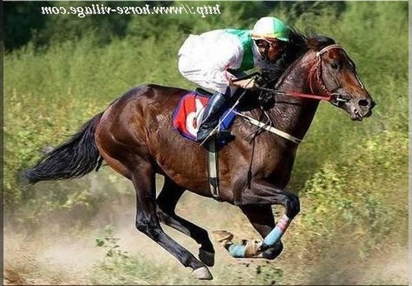 cadeau bebe d'équitation