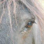 A saisir: Brosse  red dead 2 équestre | Test & avis
