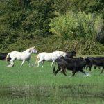 Code AMZ: Montre d'équitation | Discount