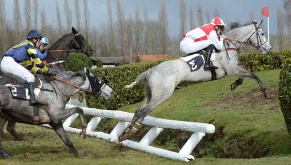 brosse  amazon poney