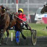 A gagner: Renes en cuir pour bride military chevaux | Test & avis
