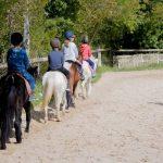 Trouve la réduction: Etrier  compositi d'équitation | En promo