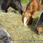 A saisir: Serviette poney | En promo