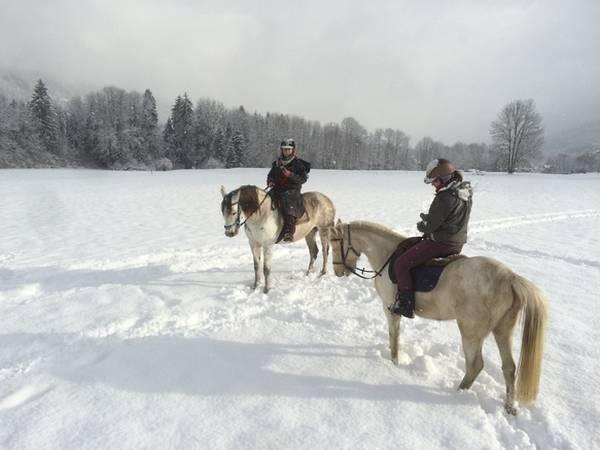 3d google chevaux
