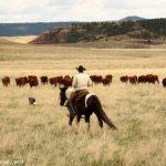 Amz code: Idee cadeau fan d'équitation | Test & opinions