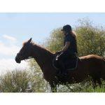 En promo: Brillant pour bottes effax poney | En promo