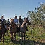 Tirage au sort: Photo cheval | Avis des testeurs