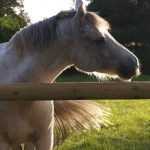Amz code: Etrille metallique chevaux | Discount