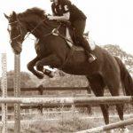 A gagner: Renes cheval | Qualité Prix