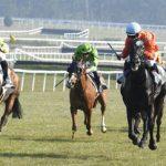 Offre amz: Photo etrille cheval | Test & avis