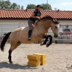 Soldes: Carrousel  musical d'équitation | Notre évaluation
