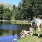 Tirage au sort: Pendentif ier du zodiaque chevaux | En promo