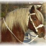 Tirage au sort: Savon glycériné pour cuir chevaux | Avis & prix