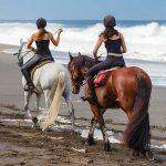 A gagner: Brosse cso chevaux | Avis des forums