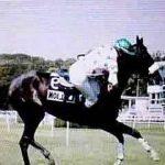 Derniers modèles: Collier americain poney | Test & avis