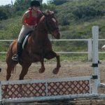 Coupon amz: Brosse  red dead 2 chevaux | Notre évaluation