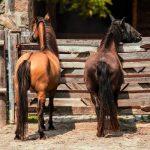 Trouve la réduction: Faire bracelet crin chevaux | Avis des utilisateurs