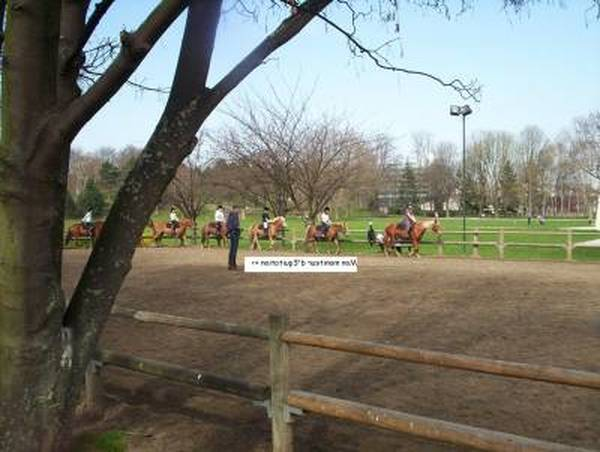 carrousel  obstacle poney