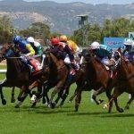 A saisir: Idee cadeau fan chevaux | Test & opinions