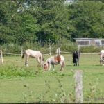 Destockage: Boite brosse cheval | Avis des forums