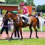Petits prix: Coque iphone 6  amazon cheval | Test & recommandation