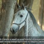 Offre amz: Brosse crin chevaux | Avis des forums