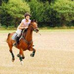 Amz code: Coque  iphone 5s cheval | Avis & prix