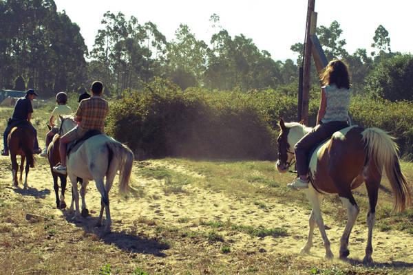 cadeau de chevaux