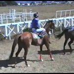 Tapis d'équitation et amortisseurs