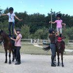 Derniers modèles: Bât de charge pour âne poney | Test & recommandation