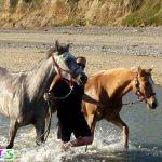 Destockage: Bât de randonnée pour chevaux | Pas cher