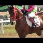 Prix en baisse: Etrille americaine  decathlon d'équitation | Test & recommandation