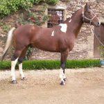 Petits prix: étrier endurance d'équitation | Discount