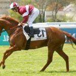 Derniers modèles: Set De Pansage chevaux | Avis des experts