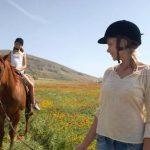 A saisir: Bride sans oeillères military cuir cheval | En promo