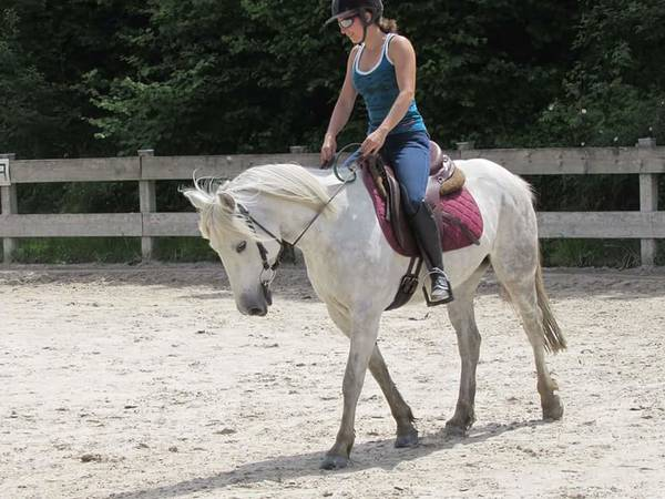 veste homme homme chevaux