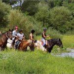 Tente ta chance: Foulard chevaux | Test & avis