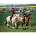 En promo: Cadeau amoureux d'équitation | Notre évaluation