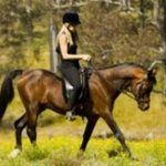 A saisir: Licol en cuir chevaux | En promo