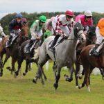 Prix réduit: Panier osier pour bât d'équitation | Test & opinions