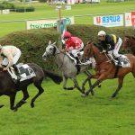 A saisir: Brosse aspirateur poney | Notre évaluation