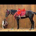 En réduction: Brosse crin de  barbe cheval | Avis des forums