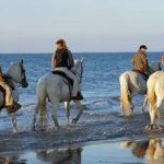 Offre amz: Bracelet ière d'équitation | Qualité Prix