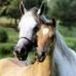 Prix en baisse: Location carrousel  de bois chevaux | Discount